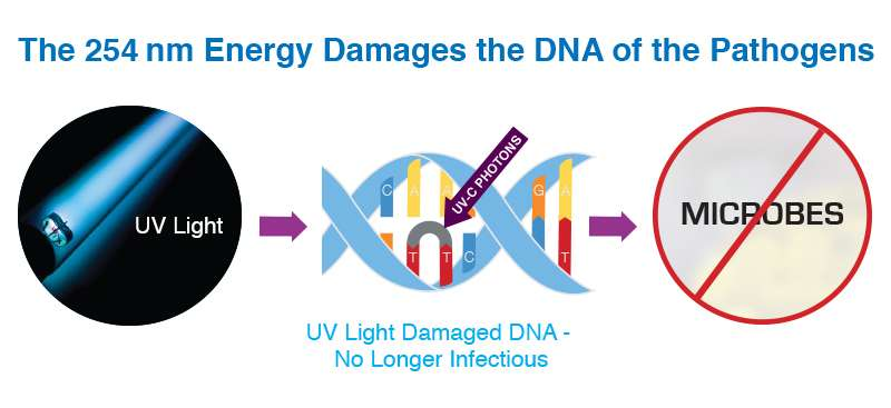 Graphic Describing UV-C Damaging DNA of Pathogens
